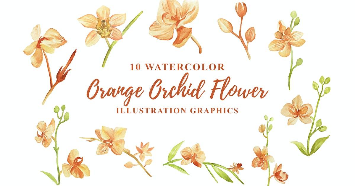 Download 10 Watercolor Orange Orchid Flower Illustration by IanMikraz