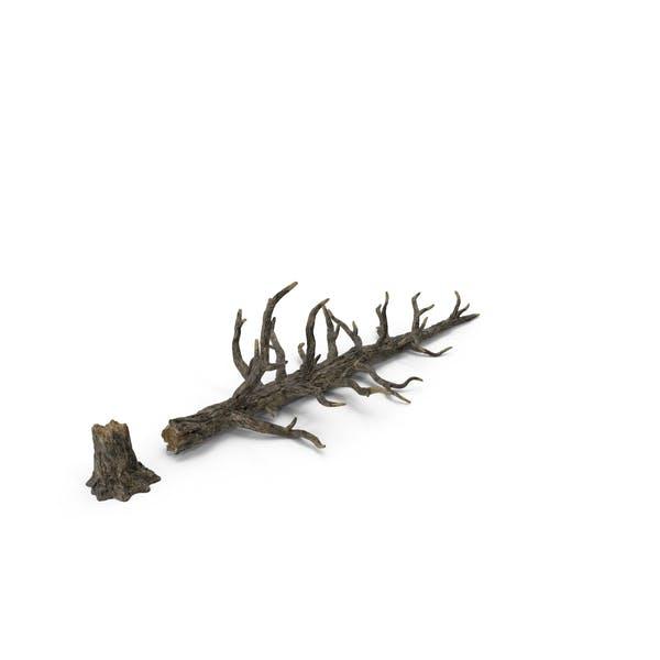 Thumbnail for Fallen Tree