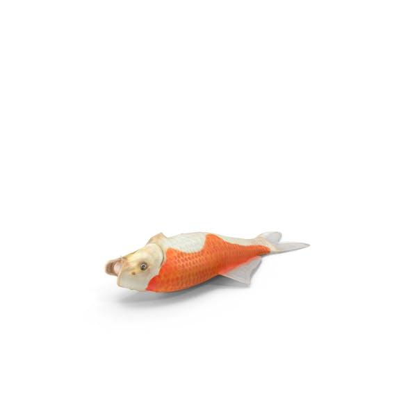 Cover Image for Harivake Koi Fish