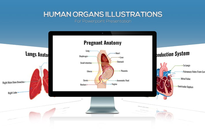 Biology - Human Organs For Powerpoint