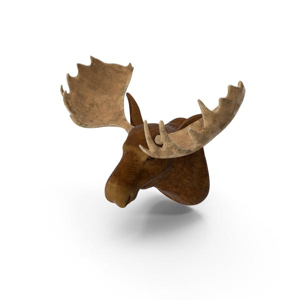 Moose Head Trophy