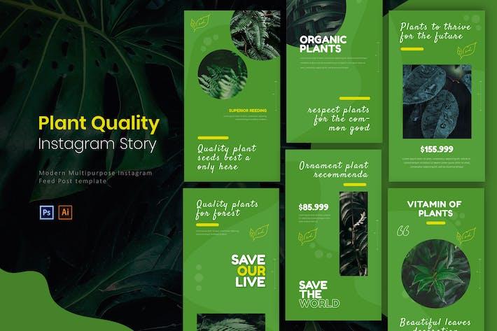 Quality Plant | Instagram Story