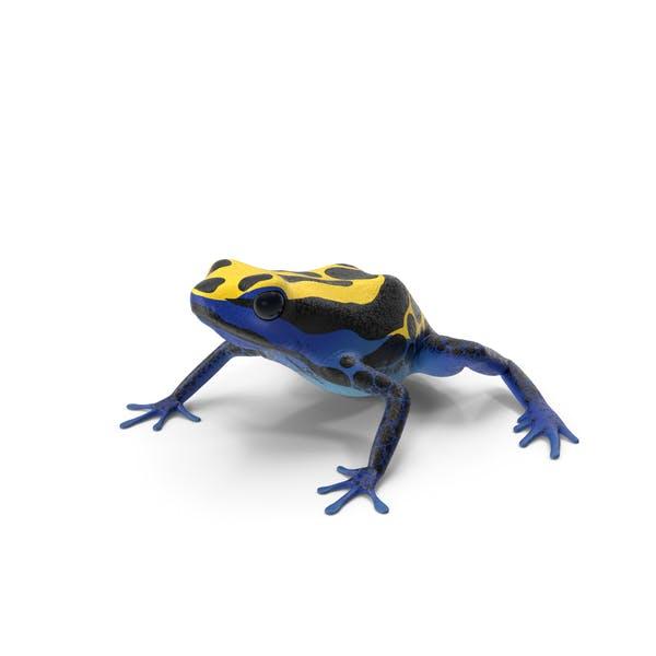 Окрашивание дротик лягушка