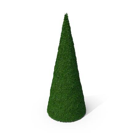 Bushes Cone