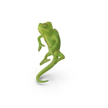 Chameleon Climbing Pose