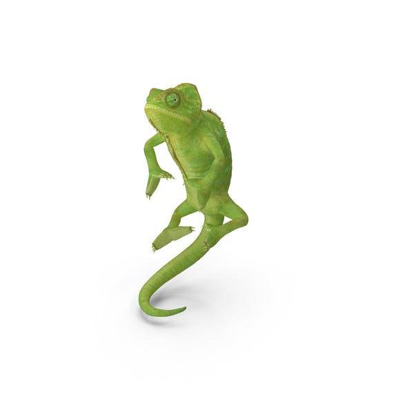 Thumbnail for Chameleon Climbing Pose