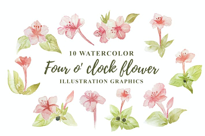 Thumbnail for 10 Watercolor Four o' clock Flower Illustration