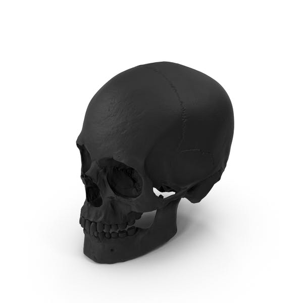 Rubber Skull