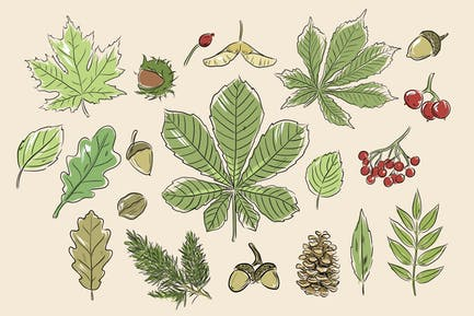 Forest Findings Doodles