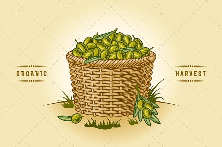 Thumbnail for Retro Basket Of Olives