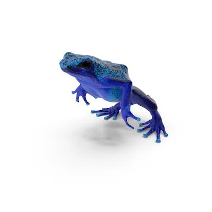 Blue Poison Dart Frog Jumping