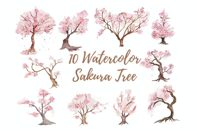 10 Watercolor Sakura Tree Illustration Graphics