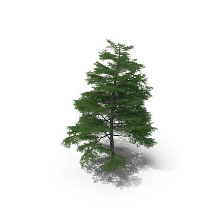 Scanned Tree