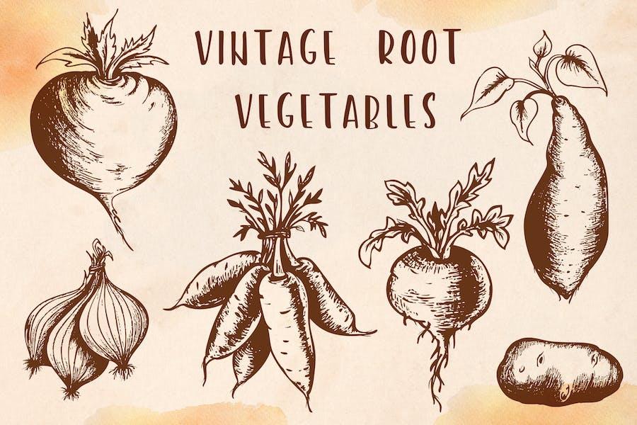 Vintage Root Vegetables