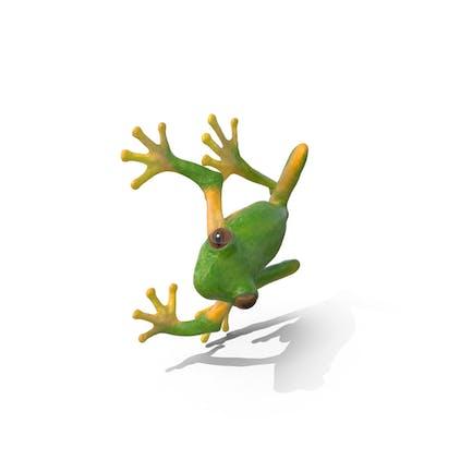 Tree Frog On Tree Pose