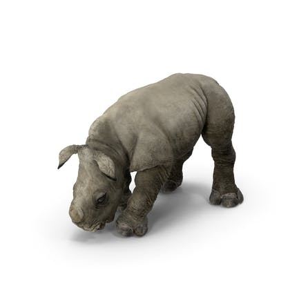 Baby Rhino Drinking Pose