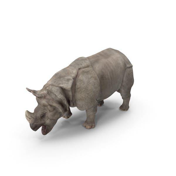 Thumbnail for Indian Rhinoceros