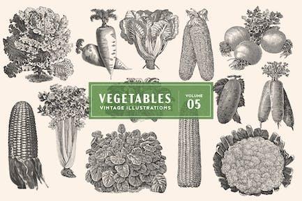 Ilustraciones Vegetales Vintage Vol. 5