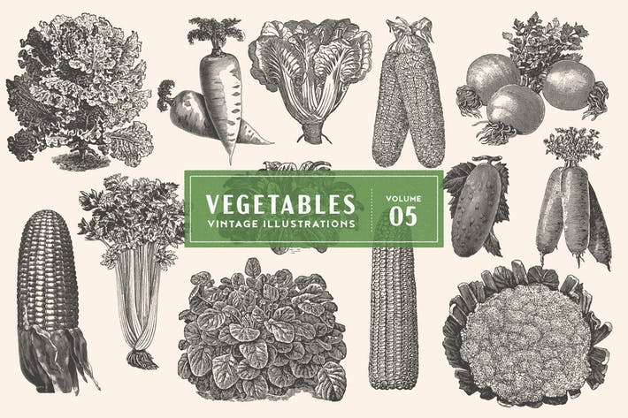 Thumbnail for Vintage Vegetable Illustrations Vol. 5