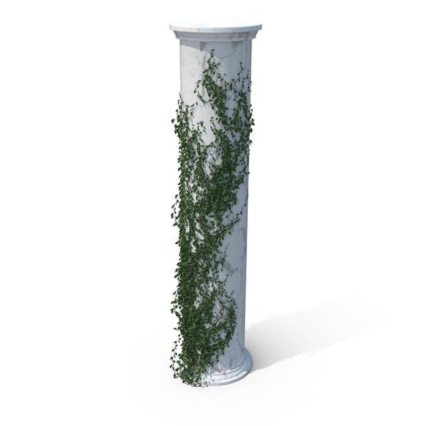 Growing Ivy