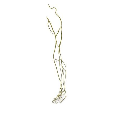 Nervensystem des menschlichen Beins