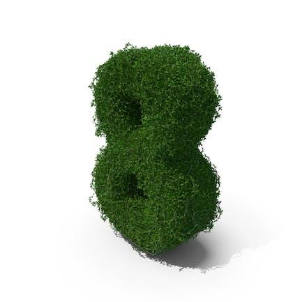Buchsbaum 8