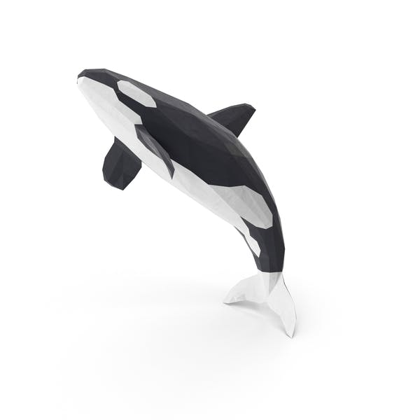 Cover Image for Orca Whale