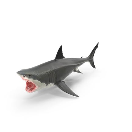 Großer Weißer Hai