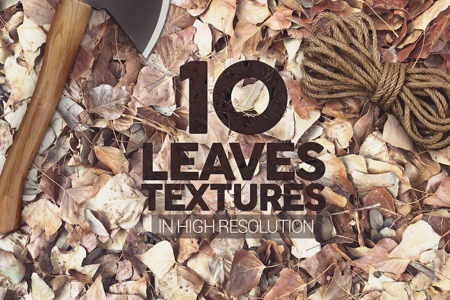 Blätter Texturen x10