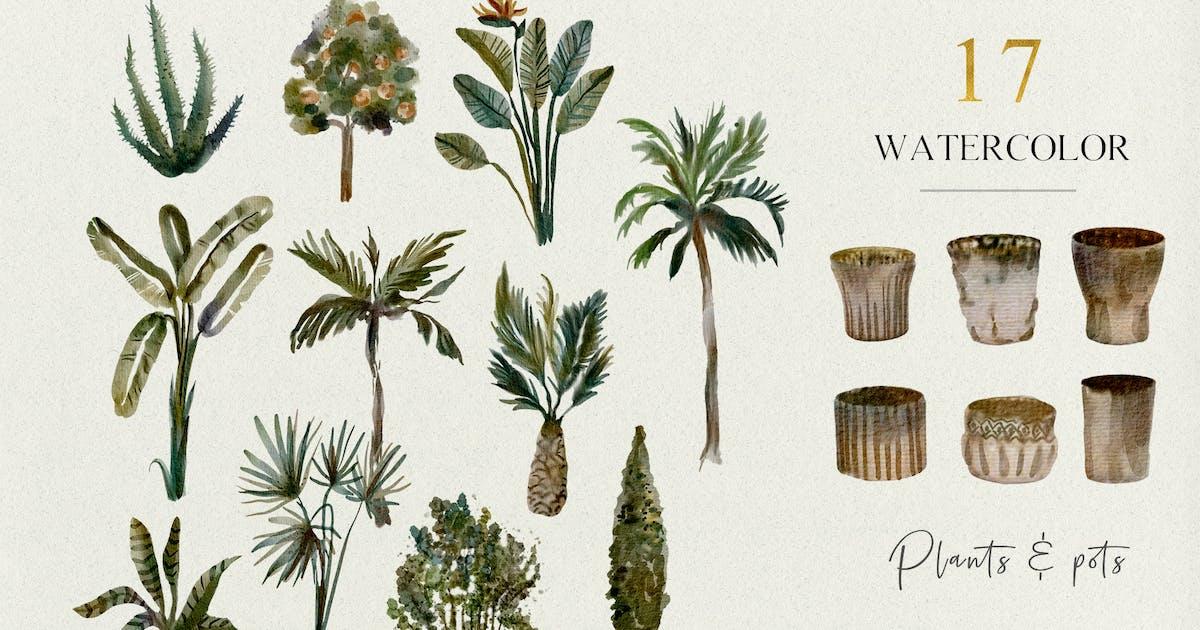 Download 17 Tropical plants and pots - watercolor set by kaleriia