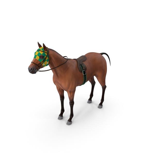 Bay Racehorse