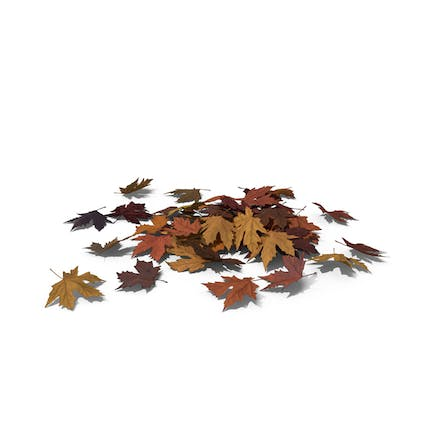 Pile of Maple Leaves