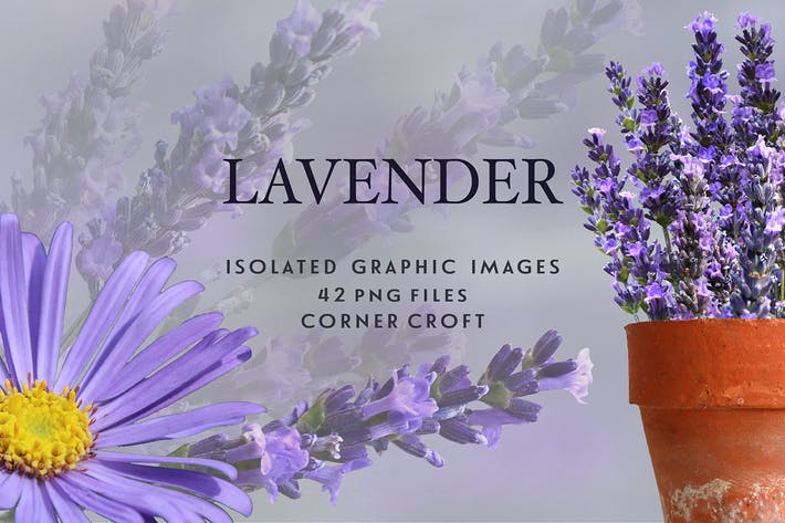 Thumbnail for Lavendel Sammlung