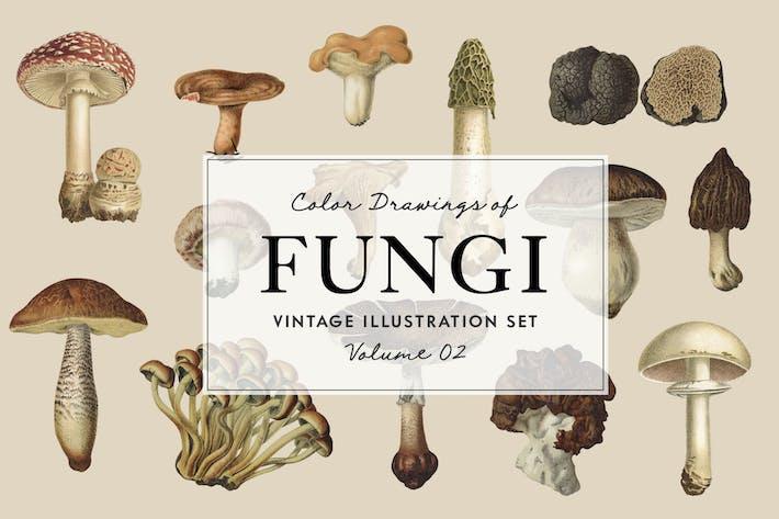 Thumbnail for Fungi Vol. 2 - Vintage Illustrations