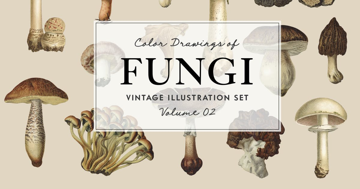 Download Fungi Vol. 2 - Vintage Illustrations by GraphicGoods