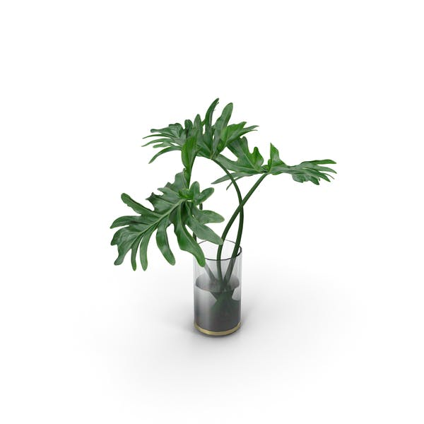 Philodendron-Blätter