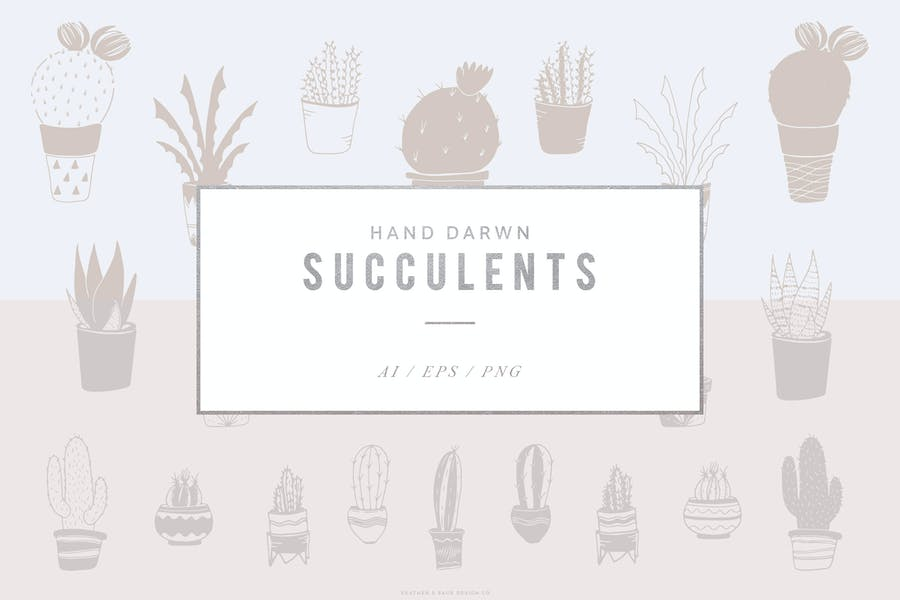 Hand Drawn Succulent Illustration Set