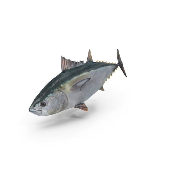Рыба тунца