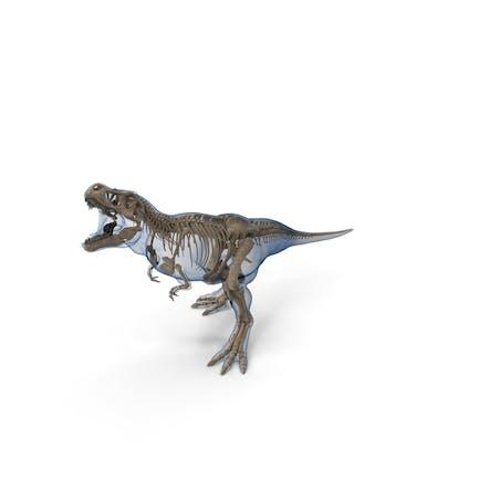 Tyrannosaurus Rex - Fósil esqueleto con postura de pie