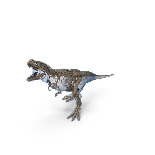 Tyrannosaurus Rex Skeleton Fossil with Skin Standing Pose