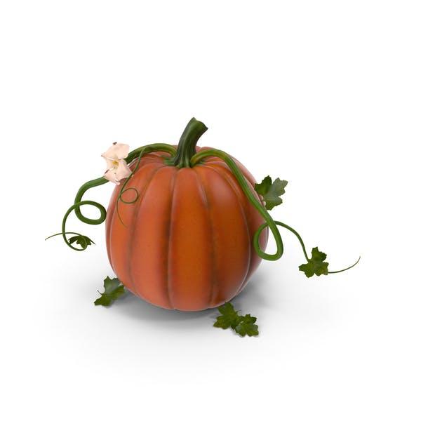 Thumbnail for Pumpkin