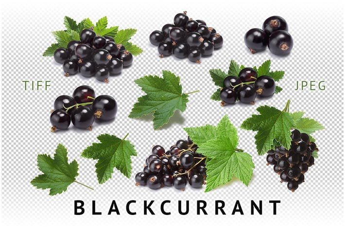 Thumbnail for Blackcurrant
