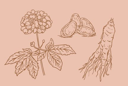 Hand Drawn Ginseng Plant Collection