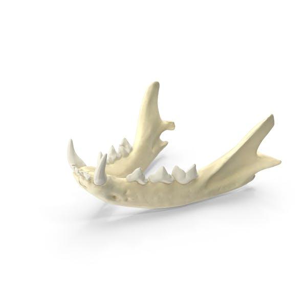 Бытовая кошачья челюсть