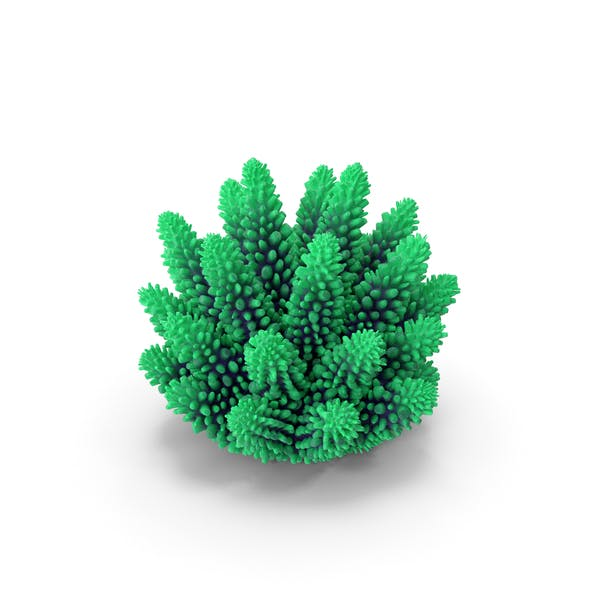 Coral 1 green
