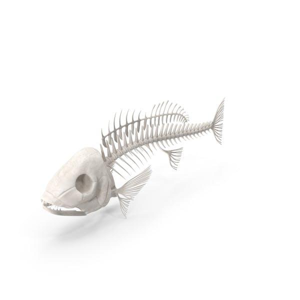 Рыба Скелет