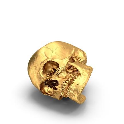Cráneo dorado