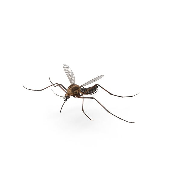 Thumbnail for Mosquito