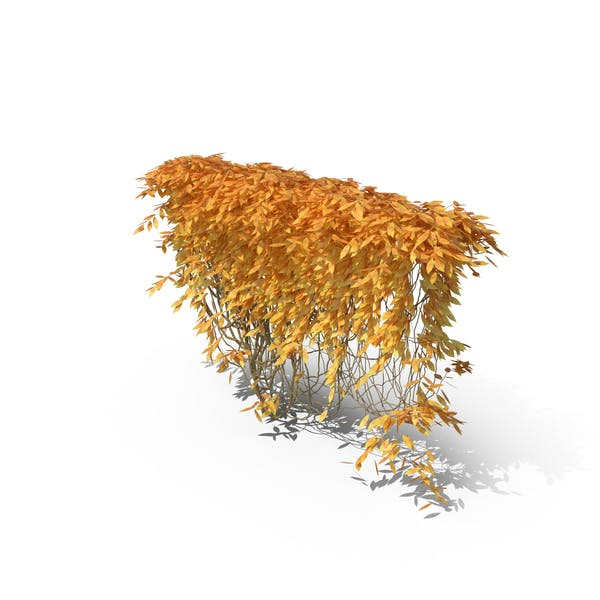 Thumbnail for Autumn Ivy