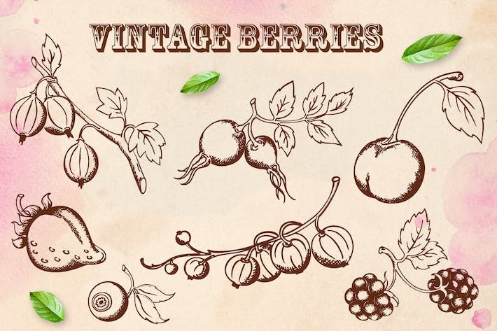 Thumbnail for Set von Vektor Vintage Beeren